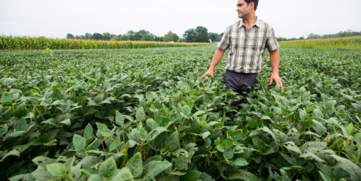 Photo of research ecologist Steven Mirsky in a field at the USDA's research farm in Beltsville, Maryland
